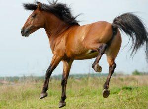 Billigste hesteforsikring