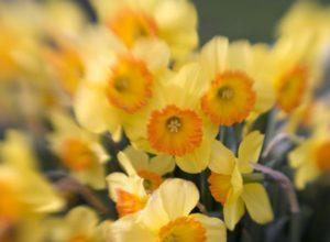 Blomster signalerer kærlighed